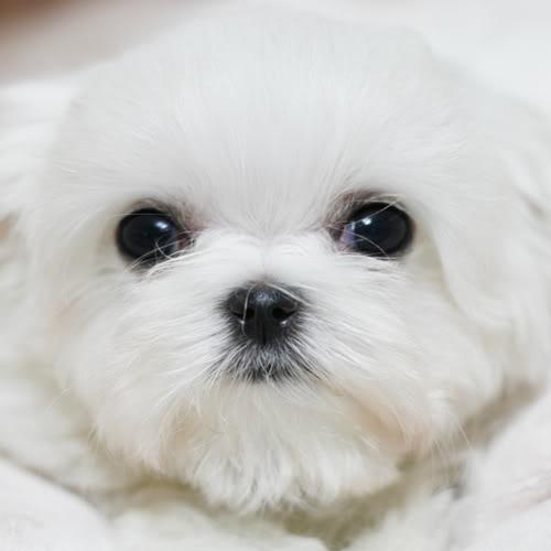 go fetch Canine Couture, LLC dba tonimari