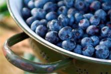 Greftenhoeve Blauwbessentuin De