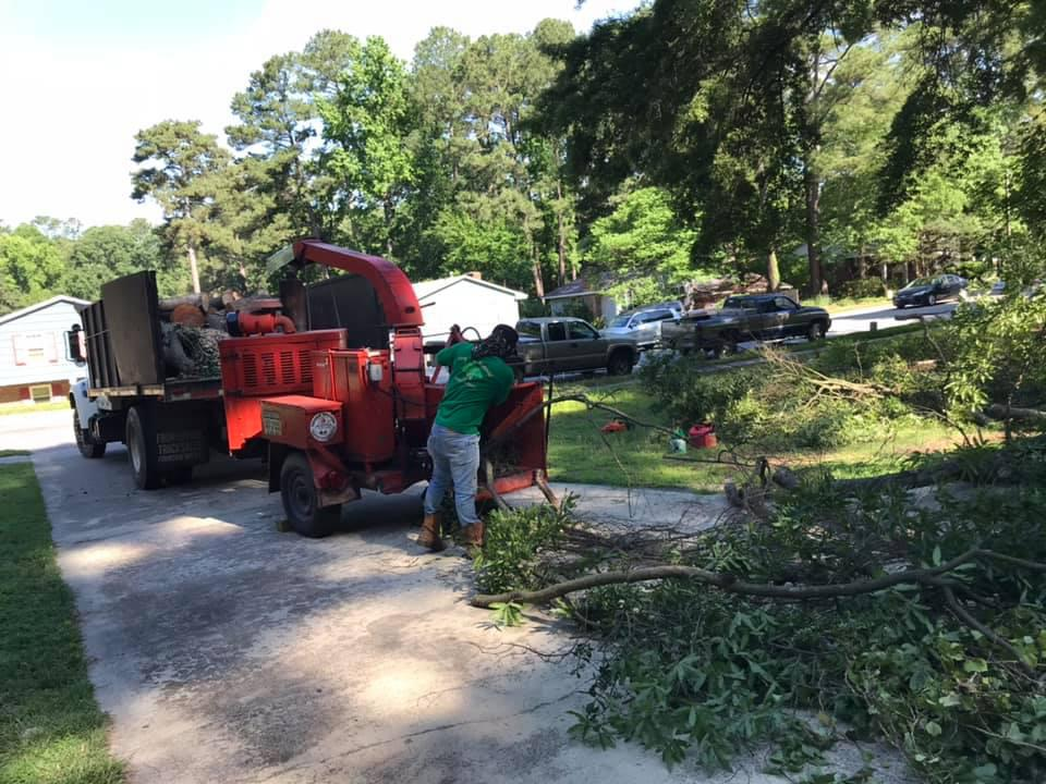 Cary Tree Removal Service and Stump Grinding