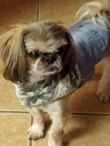 April's-Pet-Care-Pet-Sitting-Scottsdale-AZ-Best-Pet-Sitting