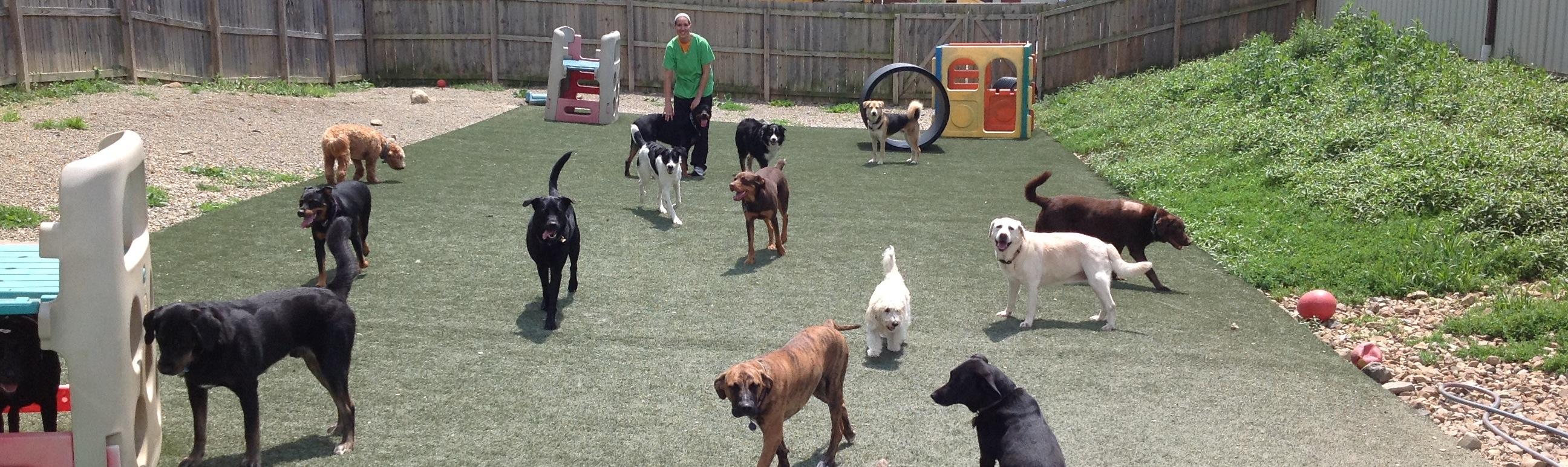 Dog Boarding Kennels Akron Ohio