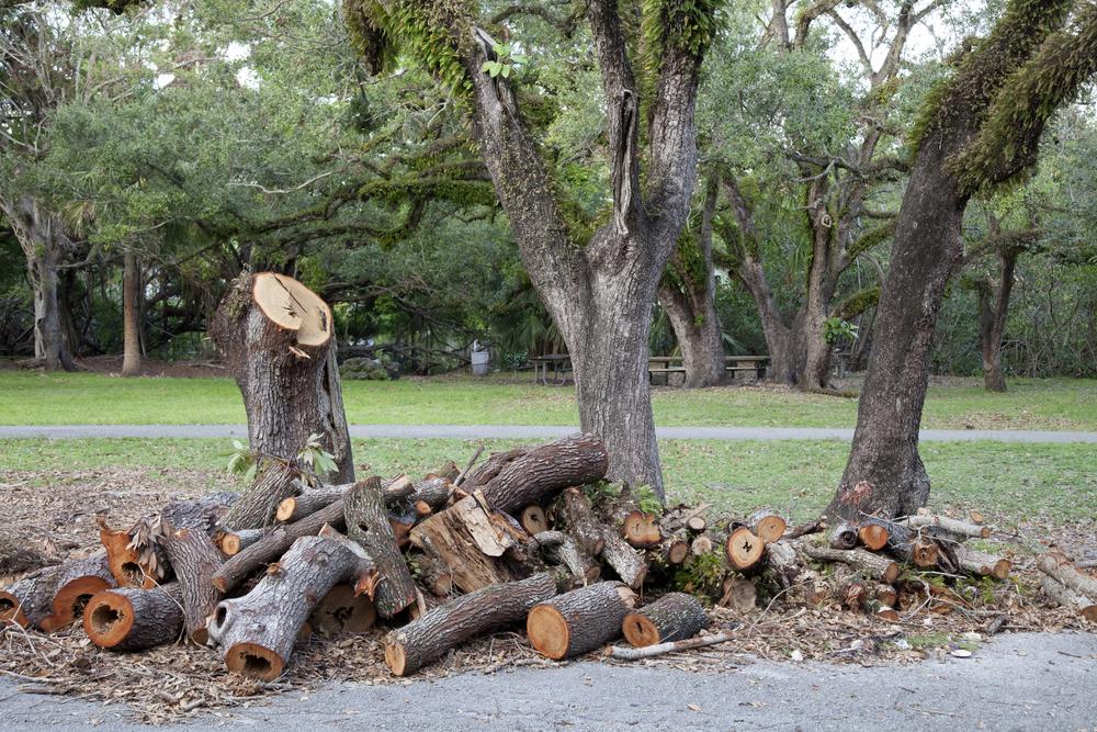 J & L Tree Service