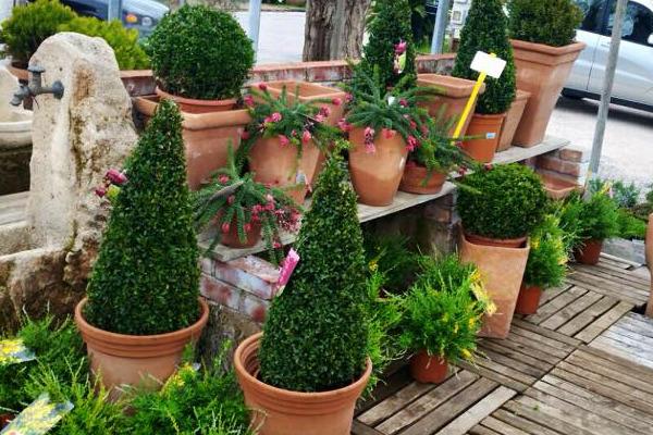 Garden claudia vivai piante articoli da giardino al for Arredatori di giardini