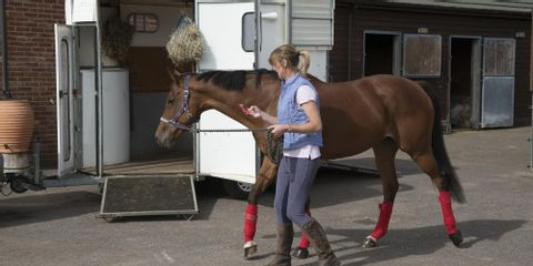 3 Essential Safety Features for Horse Trailers