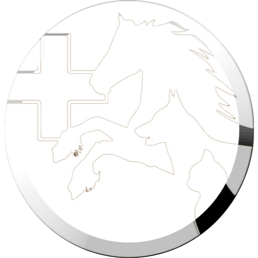 Tierärztliche Praxis für Pferde und Kleintiere Dirk Große