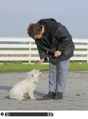 Hondenschool De Bacchanten