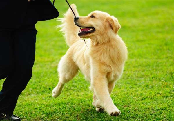 Dog Training Near Cypress Tx