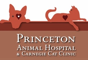 Princeton Animal Hospital Carnegie Cat Clinic Princeton Nj