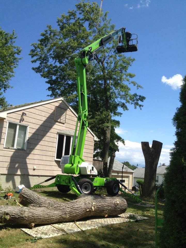 Riccio Landscaping & Tree Service image 0