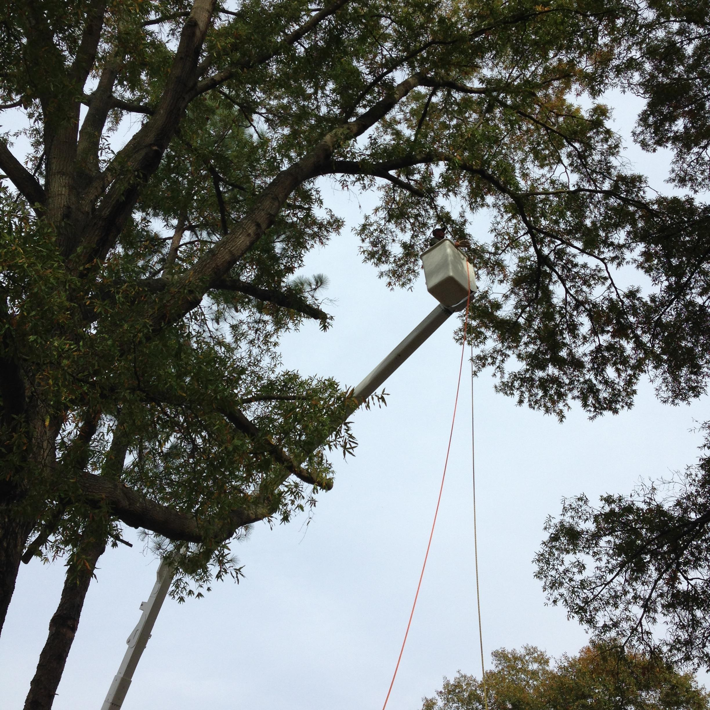 Airborne Tree Service & Relandscaping