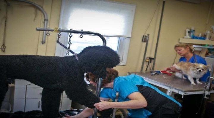 Waynedale grooming salon inc coupons near me in fort for Dog grooming salons near me