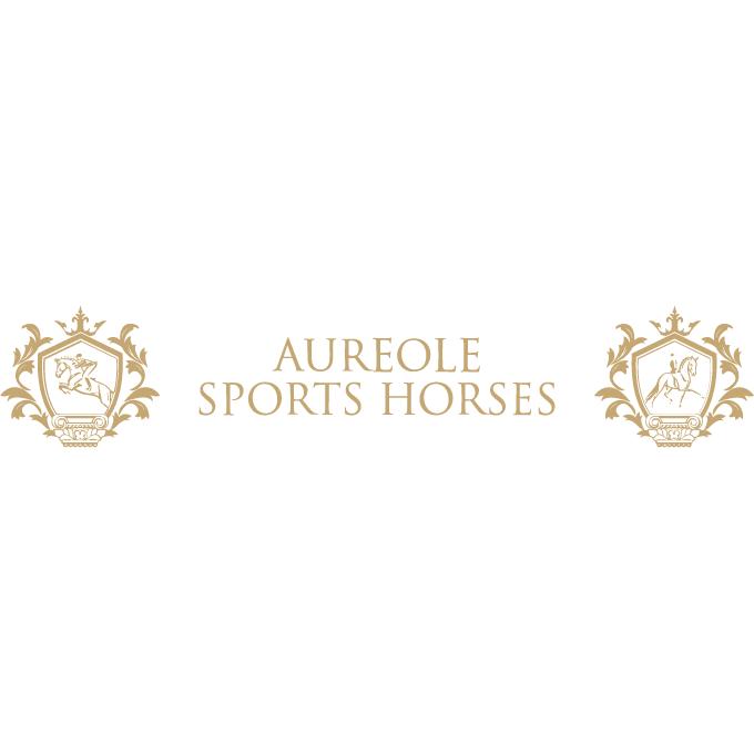 Aureole Sports Horses