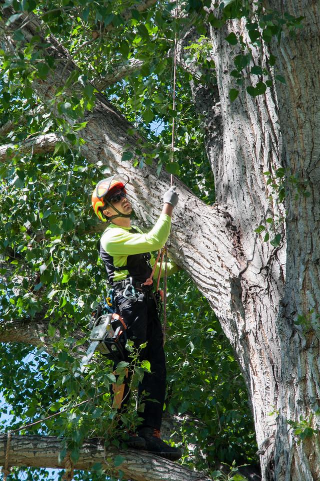Arbortec Tree Service Broomfield Colorado Co