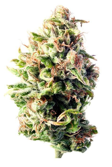 how to buy marijuana in las vegas