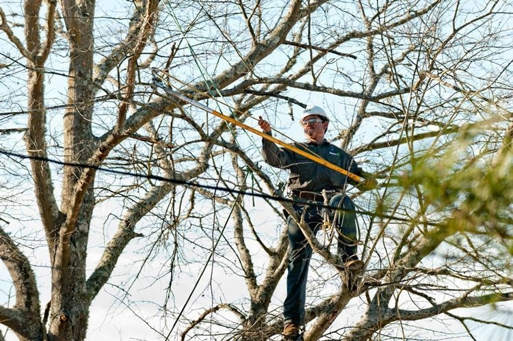 Davey Tree Expert Co of Canada Limited
