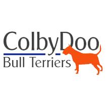 Colbydoo Bull Terriers