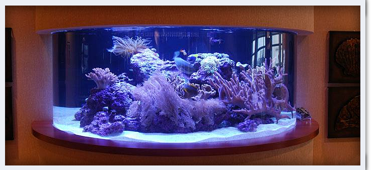 Chicago fish and coral coupons near me in orland park for Fish aquarium near me