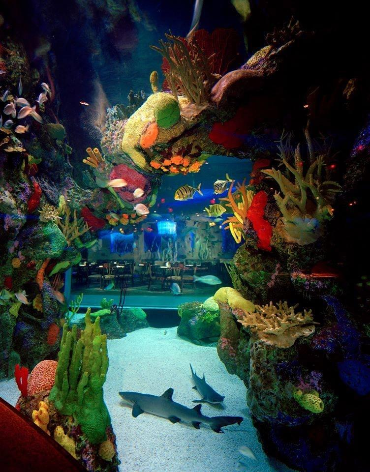 Aquarium Restaurant Nashville Tennessee Tn