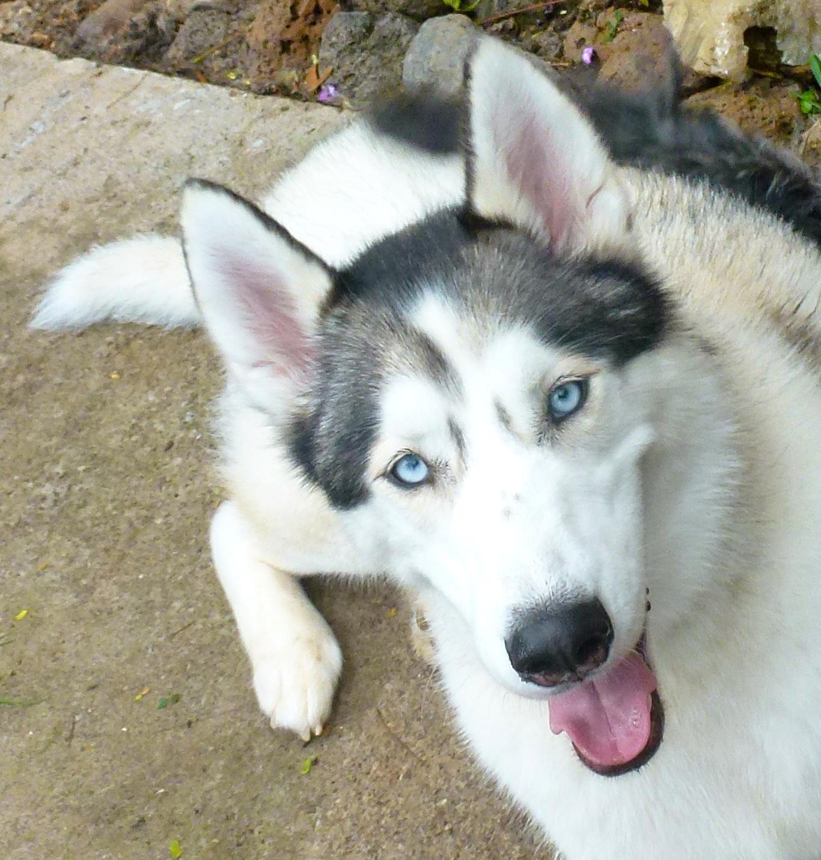 Petsmart Dog Obedience Training Reviews