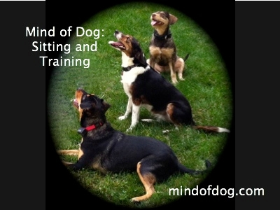 Mind of Dog, Llc