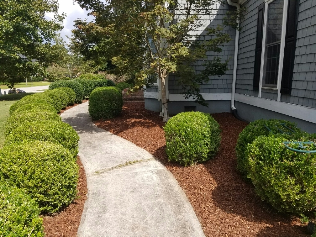 Vinedresser lawn and landscape maintenance in wilmington for Landscape maintenance