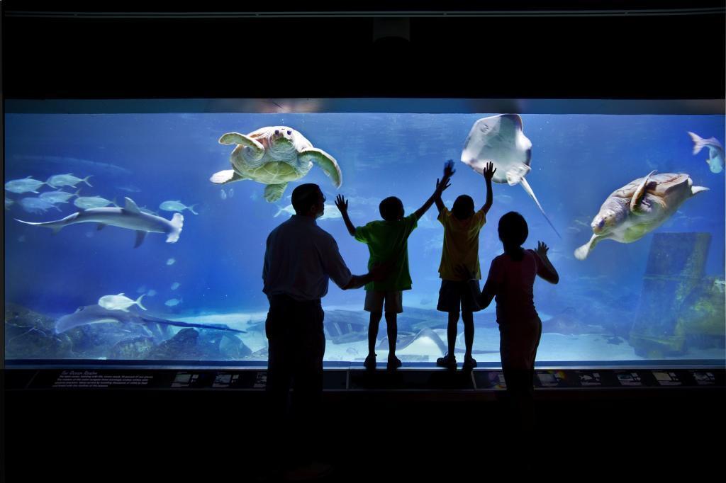 Adventure Aquarium Coupons Near Me In Camden Nj 08103