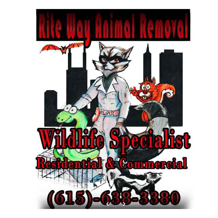 Rite Way Animal Removal