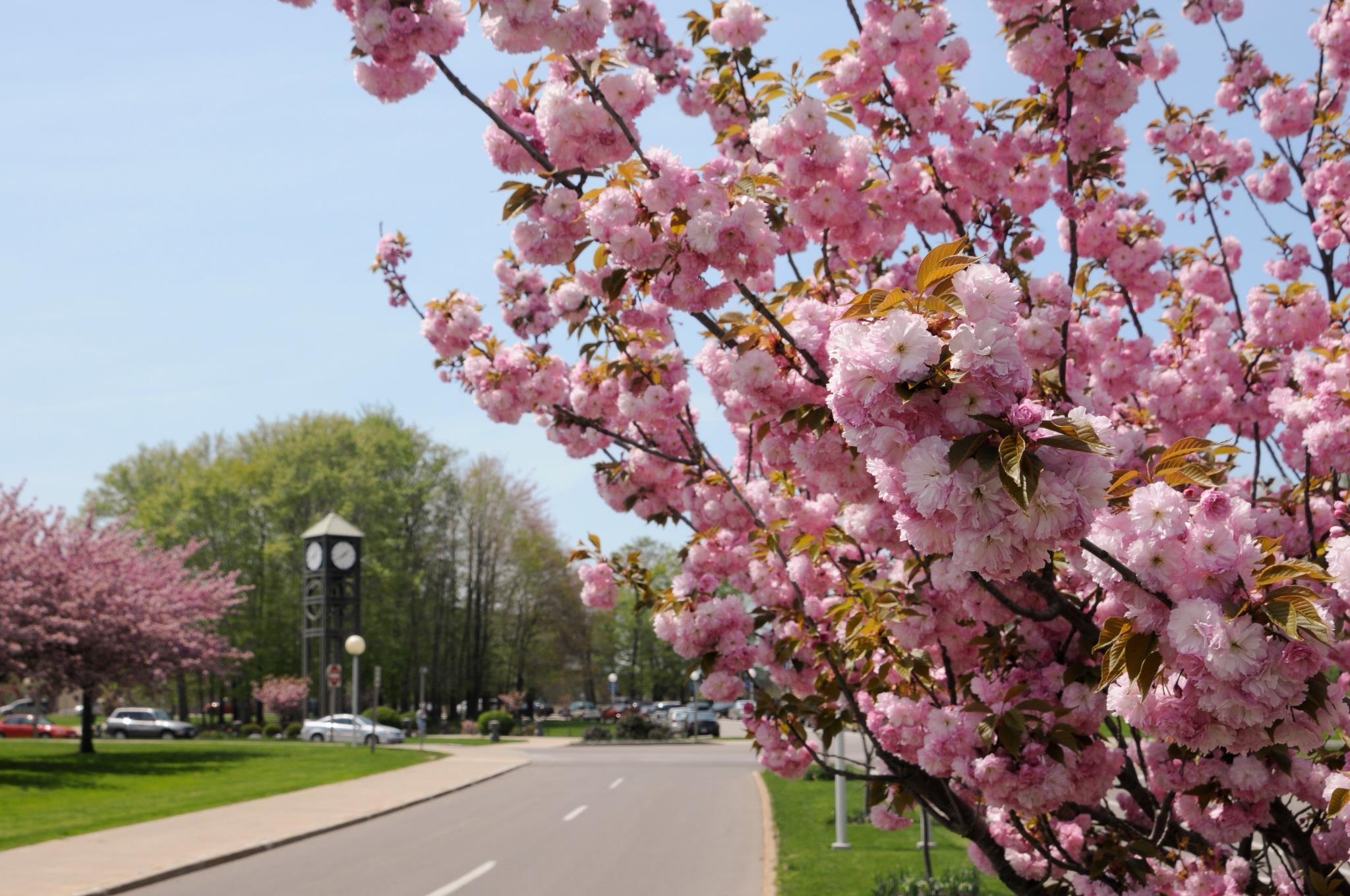 State University Of New York At Fredonia Mail: State University Of New York At Fredonia (SUNY Fredonia