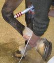Paardenpraktijk West Brabant