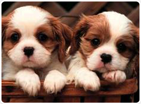 American Dog Club image 1