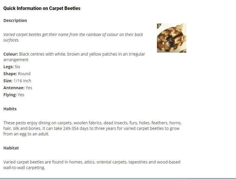 Pest Detective Ltd in North Vancouver: Carpet Beetles
