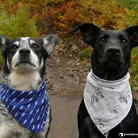 Do you need travel products for your pets? Rivertown Feed & Pet Country Store will deliver everything from food and supplements to treats, clothing, bedding and travel gear to keep your animals happy and healthy while on the journey.