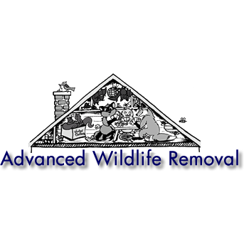 Wildlife Removal Alexandria