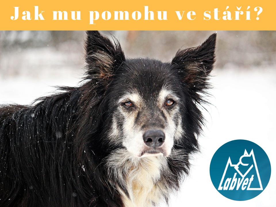 Labvet.cz, s.r.o. - veterinární klinická laboratoř