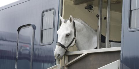 3 Reasons to Customize Your Horse Trailer