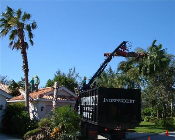 Independent Tree Service Inc image 2