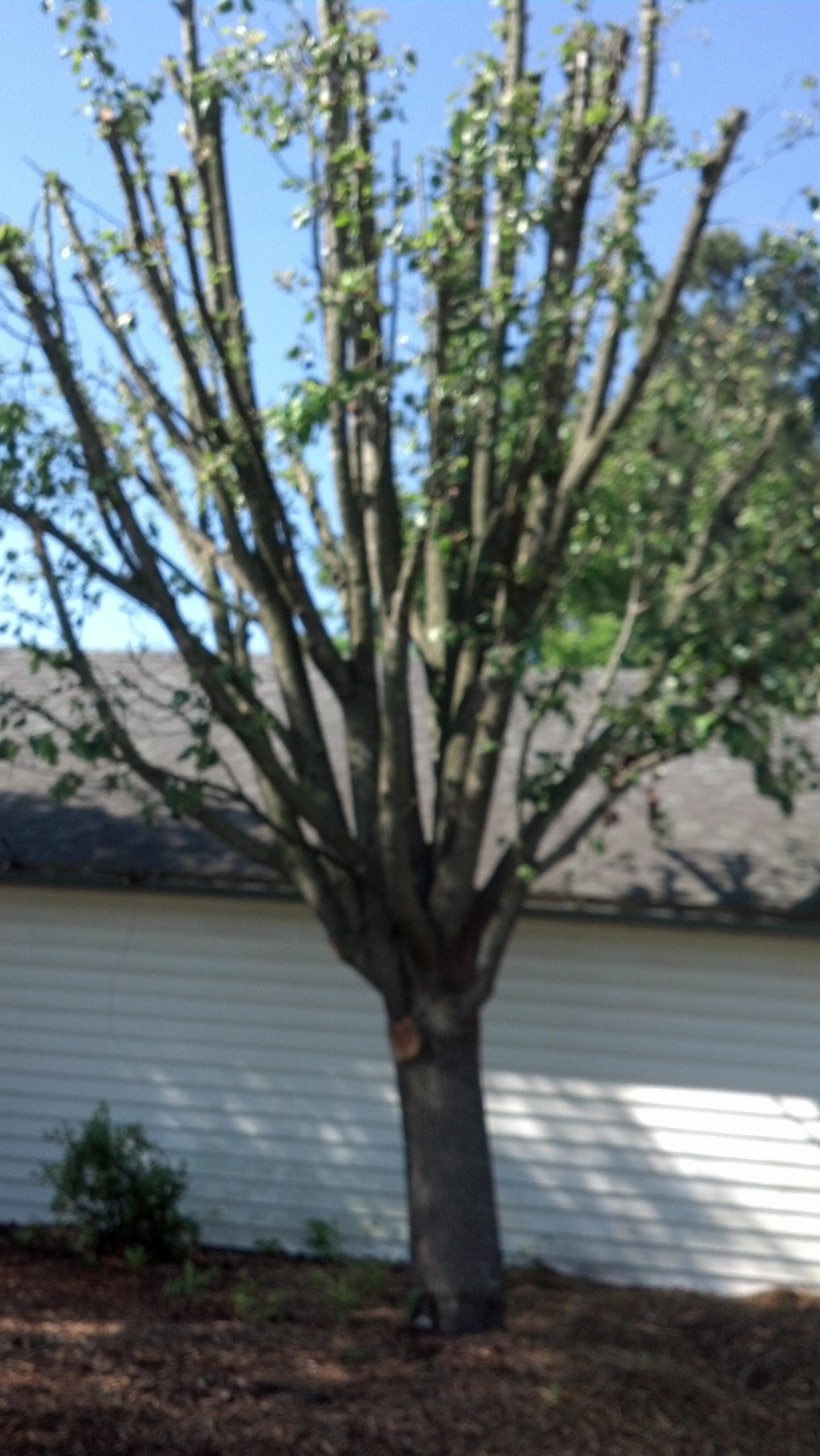 Isaacs Tree Co, Llc