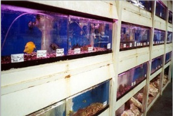 Brian 39 s tropical aquarium pets coupons near me in rocky for Exotic fish stores near me