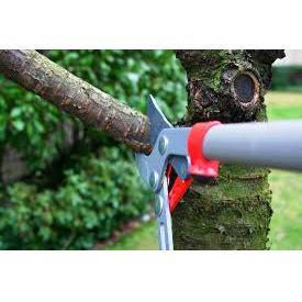 Green Day Pro Tree Service & Landscape, LLC