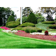 Thompson's Landscape and Tree Experts
