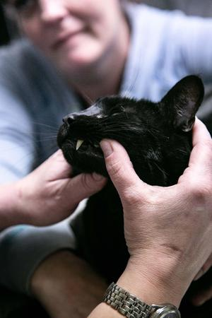 And this adorable feline was just PURRfect for his dental exam!