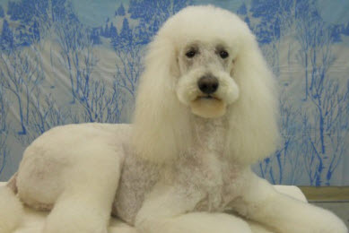 Holistic Dog Grooming Chicago