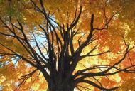 Out On a Limb Tree Care, Inc