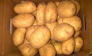 Bex BV Aardappelschilbedrijf
