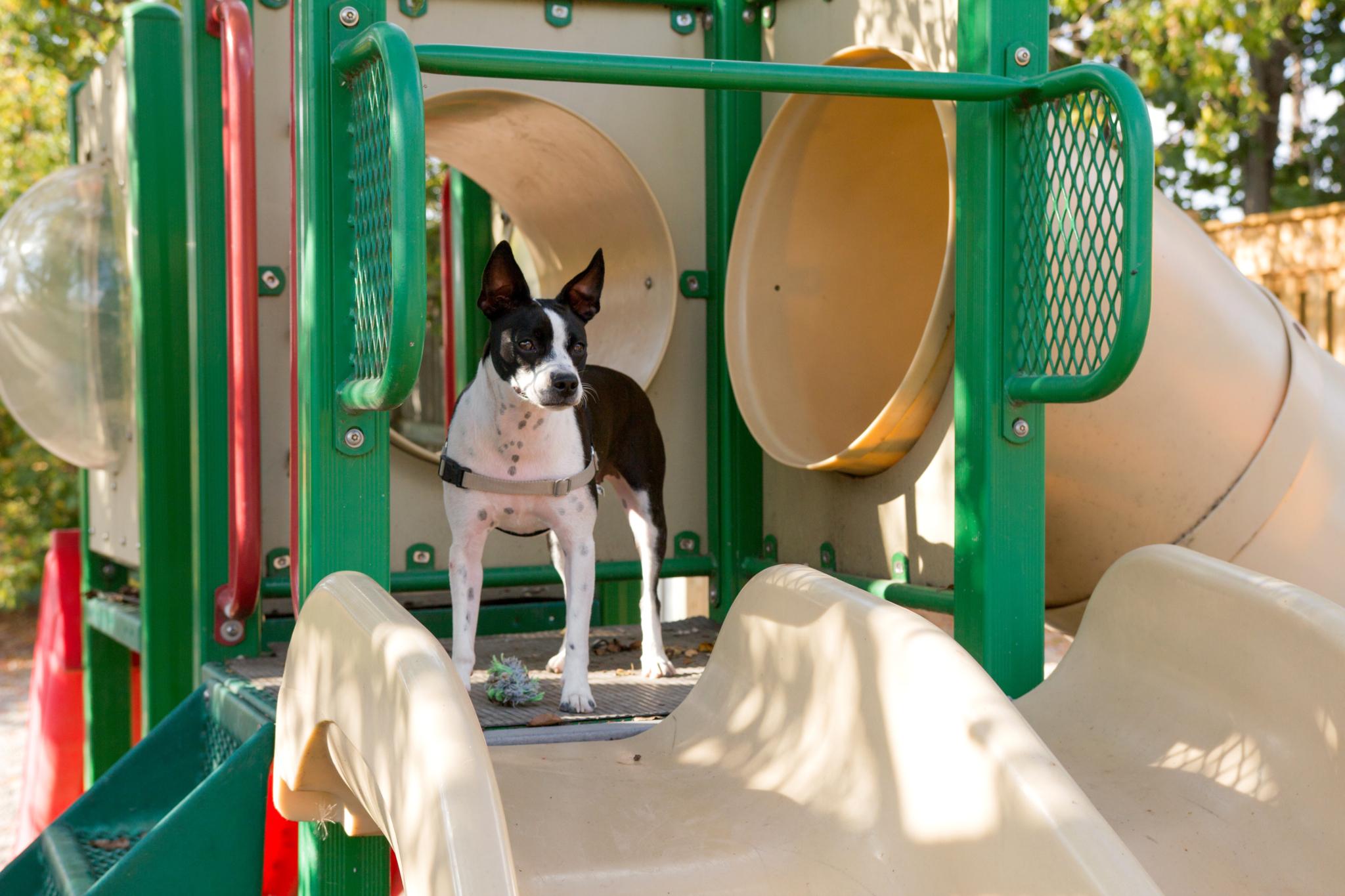 Redwood Pet Resort Milton (905)878-9410