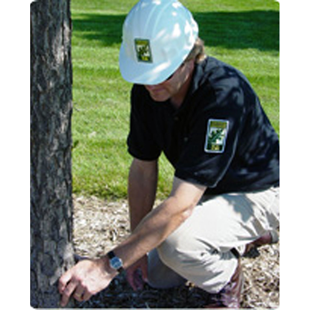 Houston Arborist LLC