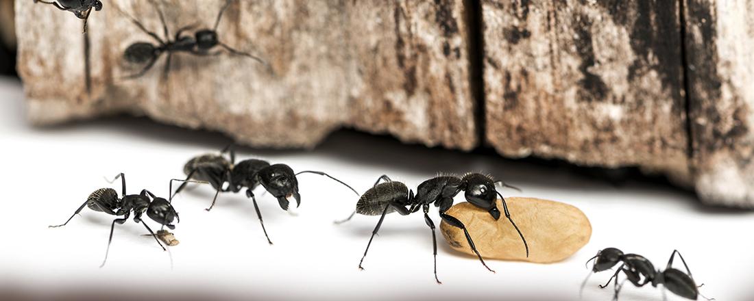 Cape Breton Pest Control And Lawn Services Ltd