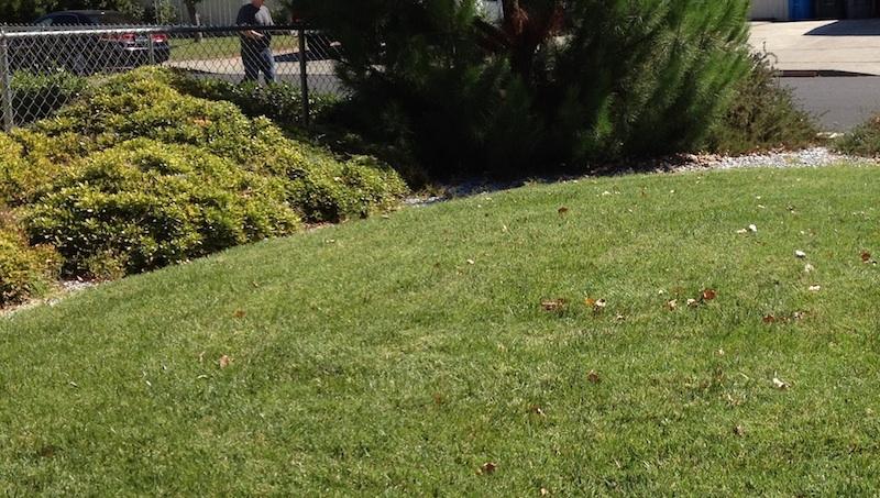 Sea Of Green Lawn Care Fairfield California Ca