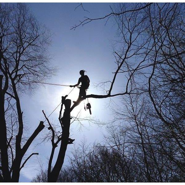 M J Tree Services London - London, London SE28 0DW - 07701 005915 | ShowMeLocal.com