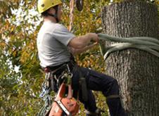 Clay's Tree Service